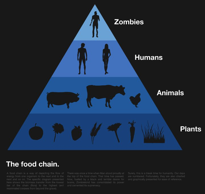 Images Of Food Chain In Nature