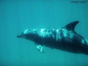 kisite marine park dolphin_Hugh Lunnon